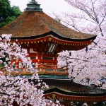 Pagoda Surrounded by Cherry Blossoms